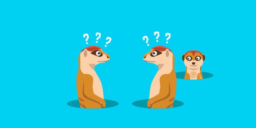 meerkat image